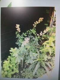 いつもお世話になっております。 ご回答宜しく御願い致しますm(。>__<。)m  PCからの画像なので分かりにくいかも知れませんが 写真の花の名前が分かりません。  ご存知の方がいらっしゃ いましたら 宜し...