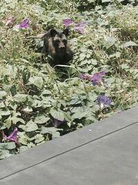 突然草むらにこの動物か現れたのですが、なんの動物か分かりません。とてもきになります。 わかる方いらっしゃったら教えてください!