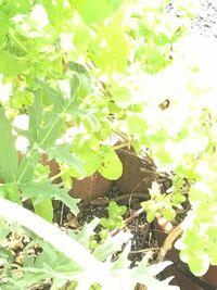 庭の花壇に小さいヘビが出ました。 何ヘビかわかりますか? 体長は30センチあるかないかくらいの、茶色い小さなヘビです。 よろしくお願いします。 画像わかりにくくてすみません。