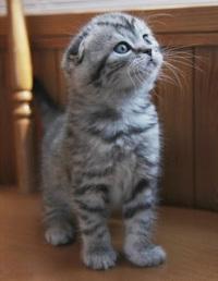 ラーテル最強説 猫最強説  どっち信じてますか?