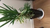 観葉植物の寄せ植えを買いました。 ユッカ以外の名前がわからず、 わかる方教えてください。 また、寄せ植えは初めてなんですが、 大きくなったらそのまま大きな鉢に植え替えたらいいんでし ょうか? それと...