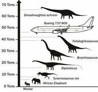 歴史上最も最大の陸上生物は体重約60トンです。 人間ではデカイボブサップが300kgのグリズリーにパワー対決で全く歯がたたなかったことを考えるとUFCのトップランカーも地球上の生物ではひよっこみたいなものです...