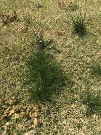 何 な は の 芝生 のか 色 隣