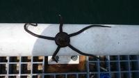 今日、豊浜漁港(愛知)に釣りに行って来たのですが、こんなのばかり釣れました。これは何でしょうか?