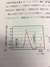 高校生物  膜電位のグラフについて、下の写真のように2ミリ秒の時に過分極して電位がいったん-60以下になります。その後に60まで落ち着くのは濃度勾配に従ってカリウムイオンがカリウムチャネルから移動するから...