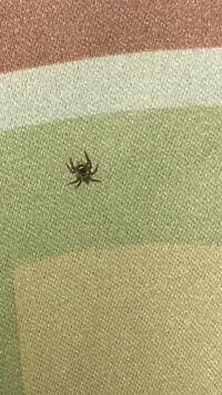 蜘蛛種類 大至急 この蜘蛛の毒の有無と殺すべきか教えてください