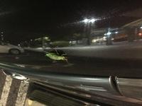 東名高速道路を夜中走っていたら車の車体にしがみついてて20キロ程一緒にドライブした虫です。 なんの虫でしょうか? バッタのような感じでした。
