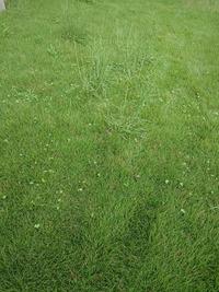 芝生の手入れですが、8cmくらい伸びています。 ヤフオクで中古の手押しローラー式の芝刈り機(ゴールデンスターGSB-2000)を買ったのですが、前に進まず、ここまで伸びてしまうとうまく切れないのでしょうか?...