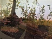 水草水槽について 水草の根っこが茶色になりました。 これは枯れているのでしょうか?茶色っぽい透明です。とったほうがいいのでしょうか‥  水草環境 サイズ 60センチ ヒーター なし 蛍 光灯あり 砂‥ソイ...