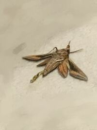 この虫はなんという虫ですか? 2つ目にこの虫は家に居るのはおかしいですよね? 3つ目にこの虫の素とか家にある可能性って高いですか?