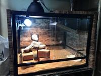 フトアゴヒゲトカゲのバスキング温度について質問です。  現在全長23cm程のフトアゴを迎えて4日目です。 ケージはパンテオン60×45×45 (両サイドと背面に断熱材)  ケージ内の左側にビバリア UVB26Wとケージ上...
