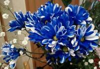 この青い花の名前を教えていただけないでしょうか。  切り花として購入したのですが、検索では答えにたどり着くことが出来ませんでした。  ご回答よろしくお願いいたします。