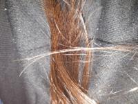 地毛なのに染めてる?と聞かれました。 染めてるように見えますか? まぁ、黒髪ではないにせよ、騒ぐほど茶髪でもないのでは?と思ってしまいます。