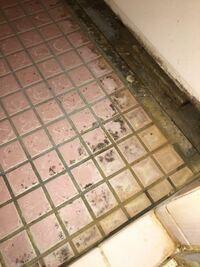 風呂場のタイルの黒ずみについてカビキラーを使用してスポンジでこすっても落ちません。どうしたらおとせますか?