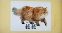 猫よりも 総総(ふさふさ)で可愛い生き物は この世にはいませんよね? (ФωФ)