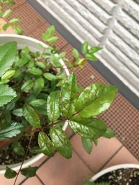 バラ初心者です。 バラの葉に斑点が出て、波打ったようになってしまいました。新葉が中心で、一部蕾にも斑点があります。 黒点病の写真より、斑点が薄い気がします。  症状が出る数日前に、ニームオイル のスプレ...