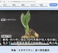 「イヌサフラン」という有毒の植物にお詳しい方へお伺いをいたします。 ・ 「イヌサフラン」という有毒の植物は、自宅の庭などに生育をしていることが多いと聞きました。 ・ ここで質問です。 ・ 「イヌサフ...
