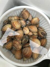 五つ目、潮干狩りで取れた貝の名前を教えてもらいたいので、分別してみました。これはなんと呼ばれる貝ですか?食べれますか?他にも分別したものの名前わかる方いたら教えてください。