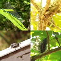 名前を知りたい虫が複数いるのですが… この4匹の名前を教えてほしいです! 名前のわかる虫だけでも構いません