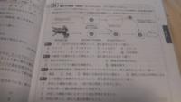 【生物基礎】問3と問4の答えは何ですか?