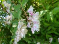 国分寺市の武蔵国分寺公園で見かけた花です、名前をお教え下さい。