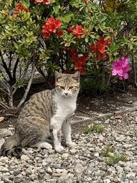 この猫はキジトラで良いのでしょうか?違う呼び方ありますか?教えて下さい