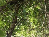 三重県伊賀市の山で見た木ノ実なんですが コレは何でしょうか???
