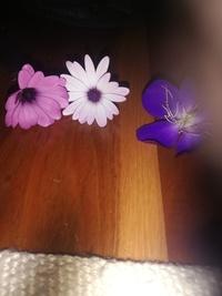花の名前を教えてください。 私は今オーストラリアのクイーンズランド州にいます(季節は秋です。)日本にいる友達に送ろうと思い花を摘みました。しかし調べても名前が分かりませんでした。せっ かくなので花言葉など調べようと思っています。花に詳しい方、ぜひご回答よろしくお願いします。
