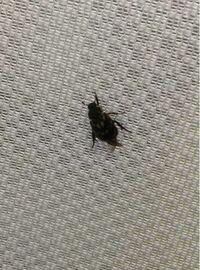 虫博士のかた、この虫は何という名前ですか?