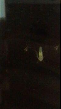 この虫なんていう名前ですか? めちゃくちゃ窓に張り付いて気持ち悪いです。この小さいのと大きいのは同じ種類の虫ですか? 1ミリもないこの虫が窓の隙間から入ってきて迷惑しています。助けてください。