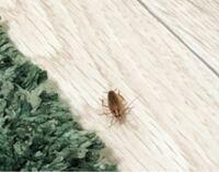 【画像注意です】 2週間まえから、ゴキブリが大量発生したいます。 すごく小さいものから中くらいのやつが、部屋のあらゆるところにいます…。 私の部屋は6畳のワンルームです。 料理をしていたら上から落ちてきた...