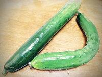 きゅうりなど野菜は、曲がっている方が自然であり美味しいのですか? 自分が物心ついたころから、すでにきゅうりはまっすぐに育つよう調整された者ばかりでした。しかし、以前のきゅうりはどれも曲がったものばか...