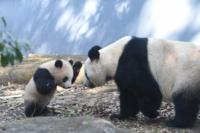 パンダも熱中症になる可能性はあるんですかね?(;´д`)