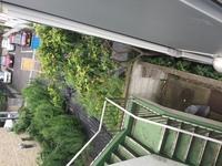 中2階から見える木がなんの木か分かる方、お願い致します。 幹は茶色くてなめらかです。 2階建て位の高さで、白っぽい花が咲きます。 2年程でここまで大きくなったようです。 よろしくお願 いします。
