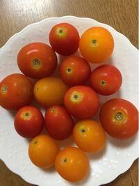 家庭菜園でミニトマトを作っています。 ヘタを取った跡はこんな感じになっているものですか? 初めての家庭菜園で分からないことだらけです。今まではスーパーのミニトマトしか食べた事がなくヘタを取った跡をあまり意識した事がないので心配になりました。
