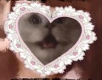 量産型のヲタクが顔を隠す際に使っている、画像のような、ハートの中に猫がいるスタンプはbeauty Pulsのどこにありますか??