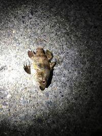 この魚はなんですか? 三浦半島の堤防釣りで釣れました!