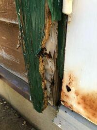 ログハウスのドアの木枠に腐食してある部分があります。 高さ1/4程度の部分がカサカサになっていて指でめくれるほどで酷いところは崩落してますが、それ以外は硬い木のままです。 業者さんのHPでシロアリの食べた...