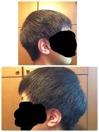 この頭の形は絶壁でしょうか? つむじ周辺が平らに見えるのが気になります。髪の毛は櫛で梳かしています。