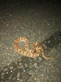 この蛇はなんて言う蛇ですか???