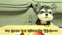 このわんちゃんは何と何のミックス犬なんでしょうか 韓国のワンちゃんでyoutube登録もしているのですが韓国語ばかりでわかりません、、、