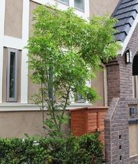 建売住宅など一軒家に植樹をされている方にお伺いをいたします。 ・ 自宅の一軒家にどうして果実がなる樹木を植樹されないのでしょうか。 その理由を教えていただければと思います。 ・ ・ 投稿理由: 果実...