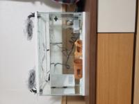 ウーパールーパーを飼育している方に質問です。 私は5日前にウーパールーパーをお迎えしたのですが、飼育が初めてということもあり現在の環境が不安です。  写真の通り45センチ水槽と付属のフィルター、そして右に投げ込み式フィルターを入れ、冷却ファンを2つ取り付けています。 水温は22~24℃、水換えは1日おきに二分の一変えています。  餌はひかりウーパールーパーと冷凍赤虫を1日おきにあげています。...
