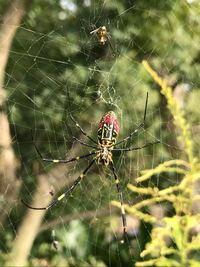 クモは秋から蜘蛛の巣張りますが、夏場は何してますか? 夏場あまり見かけません。  蜘蛛の巣に裏表上下ありますか? 明らかに頭が下になって張り付いてるのがいます。 人間が見て上下に張りますよね。 餌がかか...