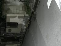 この動物は何ですか? ハクビシン?タヌキ?  東京都北区での撮影です。