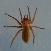 このクモは体長12ミリは何蜘蛛ですか?