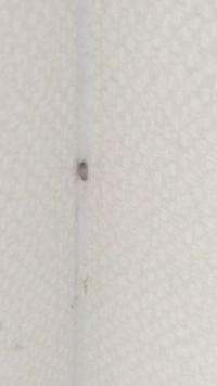 【虫注意】 こんな幼虫みたいなのが頻繁に家にいます なんの幼虫かわかりますか?  対処法などあったらお願いします。 見かけたら潰してるのですが、出処が分かりません。