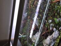 現在水草水槽立ち上げ4日目の初心者です! お忙しいとは思いますが、よろしくお願いします。  11月14日に90×45×45水草水槽を立ち上げました! 最初の2日目位は綺麗だったのですが、一昨日ヒ ーターを投入した...