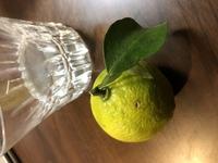 知人の家で収穫した柑橘です。 木はトゲがありユズなのかと思ってましたが、実はゴツゴツ感が少なく香りもユズらしさが少ない気がします。 これが何の柑橘か分かりますか?
