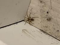 このクモはなんていう種類になるんでしょうか? 益虫ですかね?